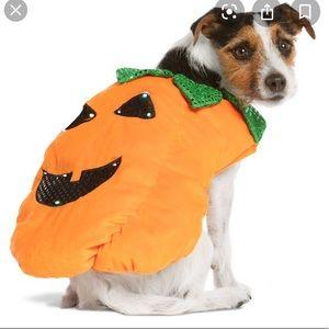 Dog Pumpkin Halloween costume size Large